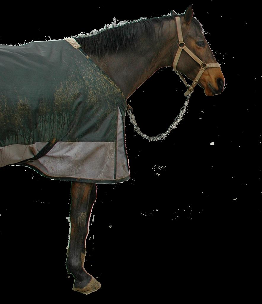 1442035_65124847_caballo